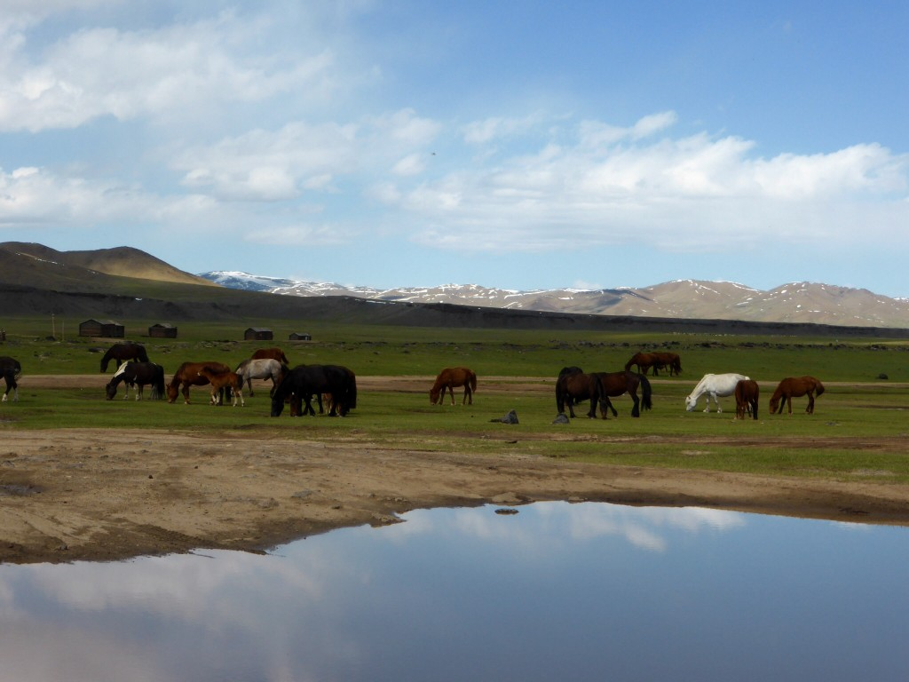 Steppe_Mongolei