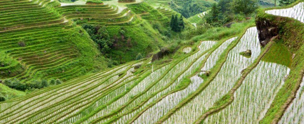 Die Reisterrassen von Longji