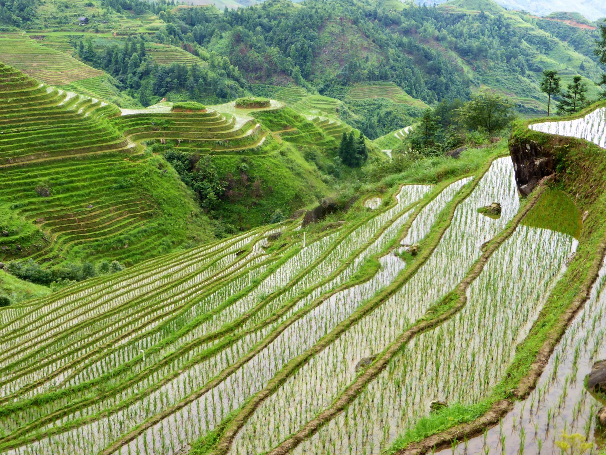 Die Reisterrassen von Longji – grüne Treppenstufen in den Himmel