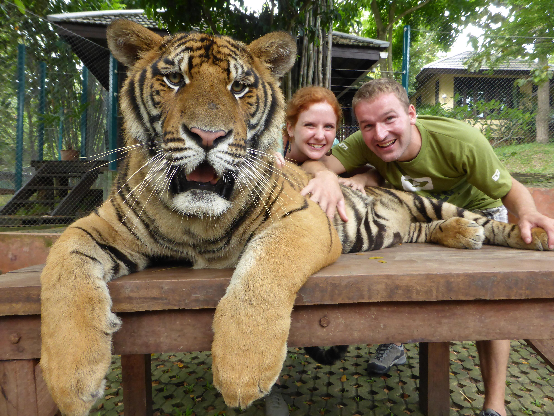US_Tiger