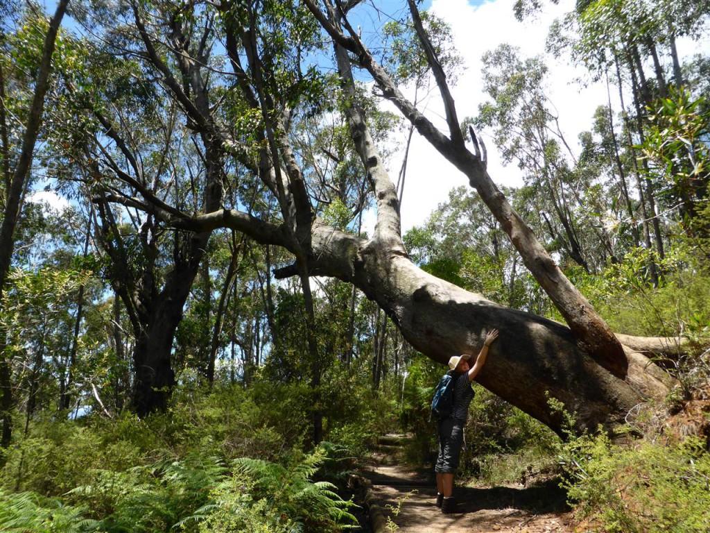 Tree hugger :-)