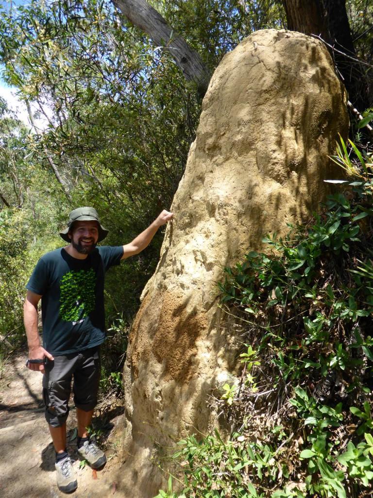 Kein Fels, sondern ein riesiger Termitenbau