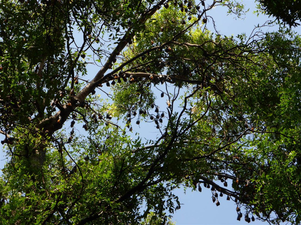 Fledermaus-Baum
