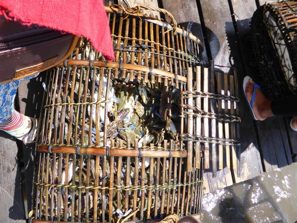 Fangfrische Krabben