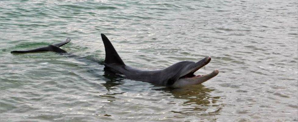 Kein Dackel- sondern Delfinblick