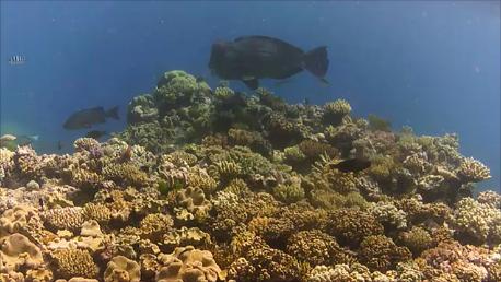 Tauchen am Great Barrier Reef – ein Traum wird wahr.
