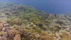 Tolle Korallenfelder