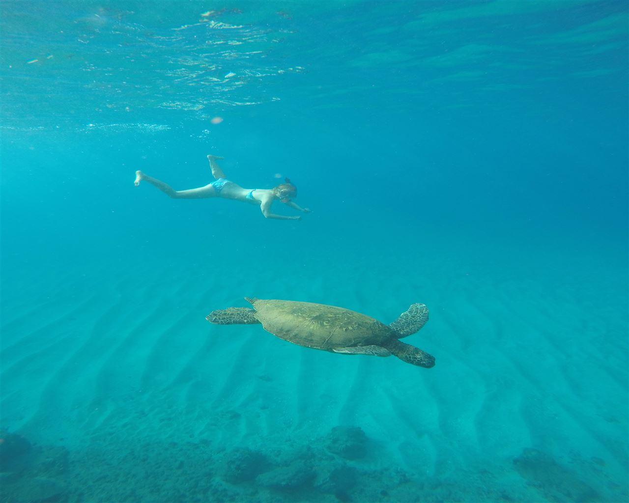 2 Schildkröten :)
