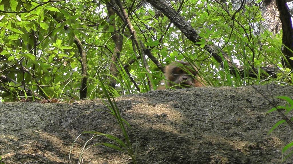 Wo ist der Affe...