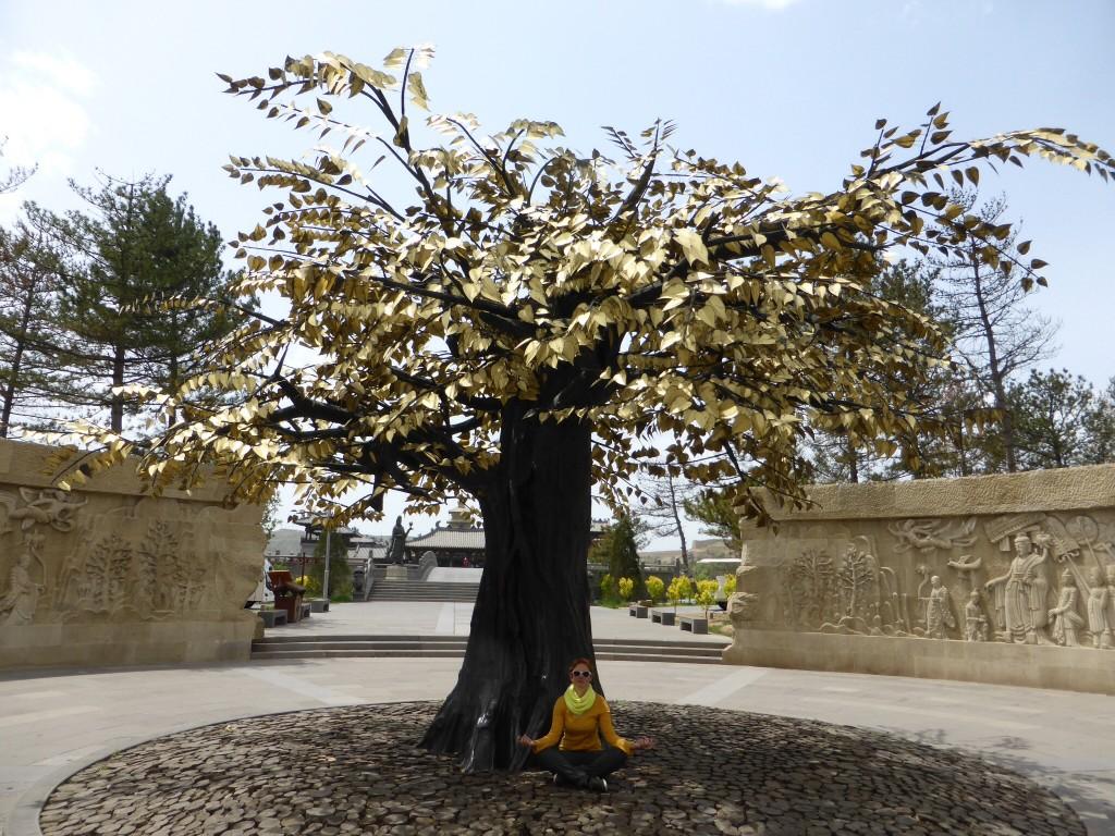 Unter dem Baum der Erleuchtung - ob´s klappt? ;-)