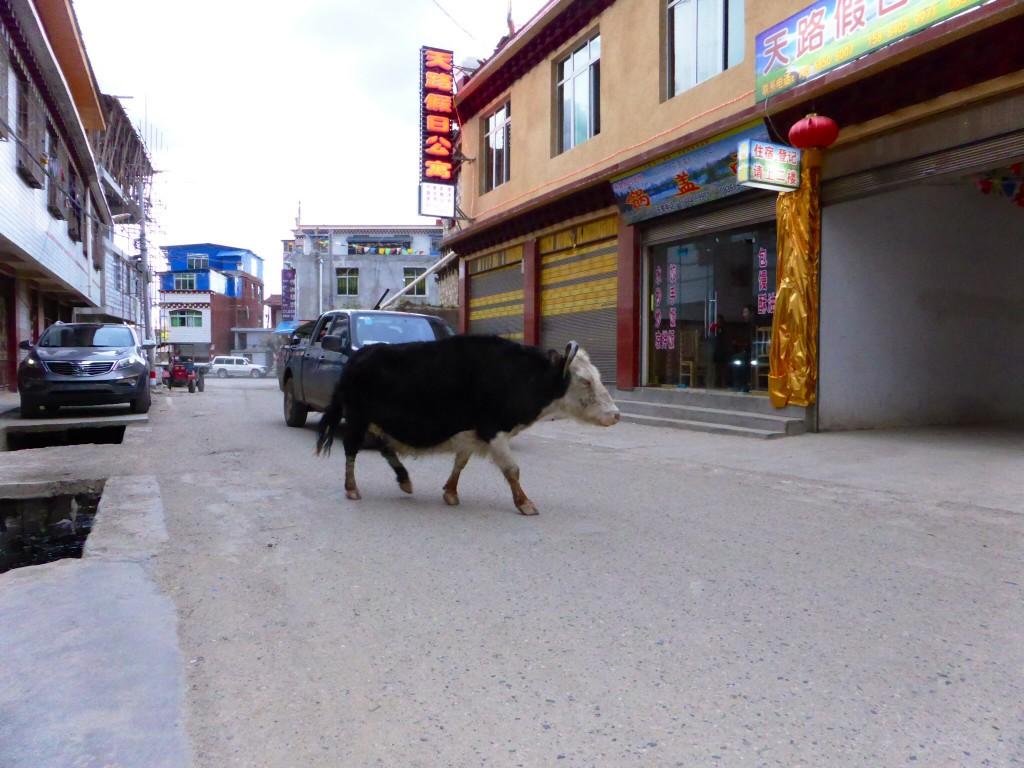 Tibetische Verkehrsregel_ Yak vor links ;-)