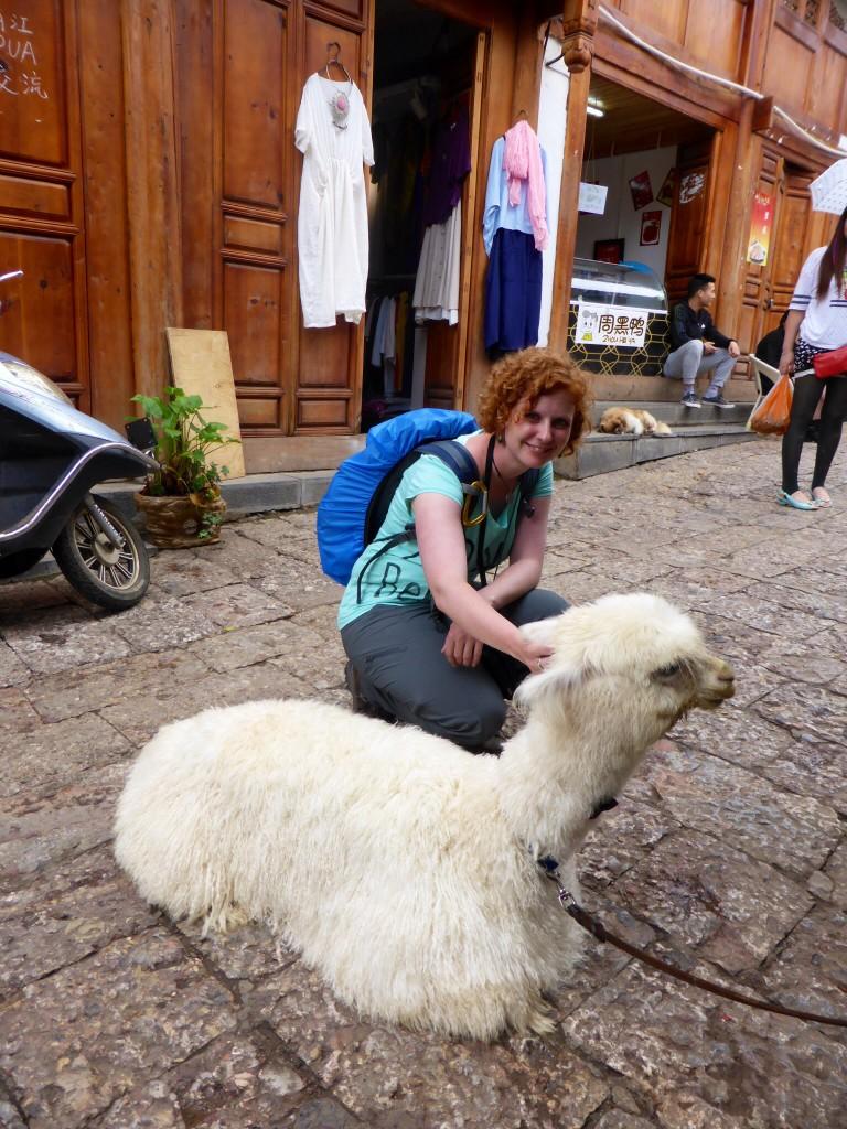 tierische Touristen