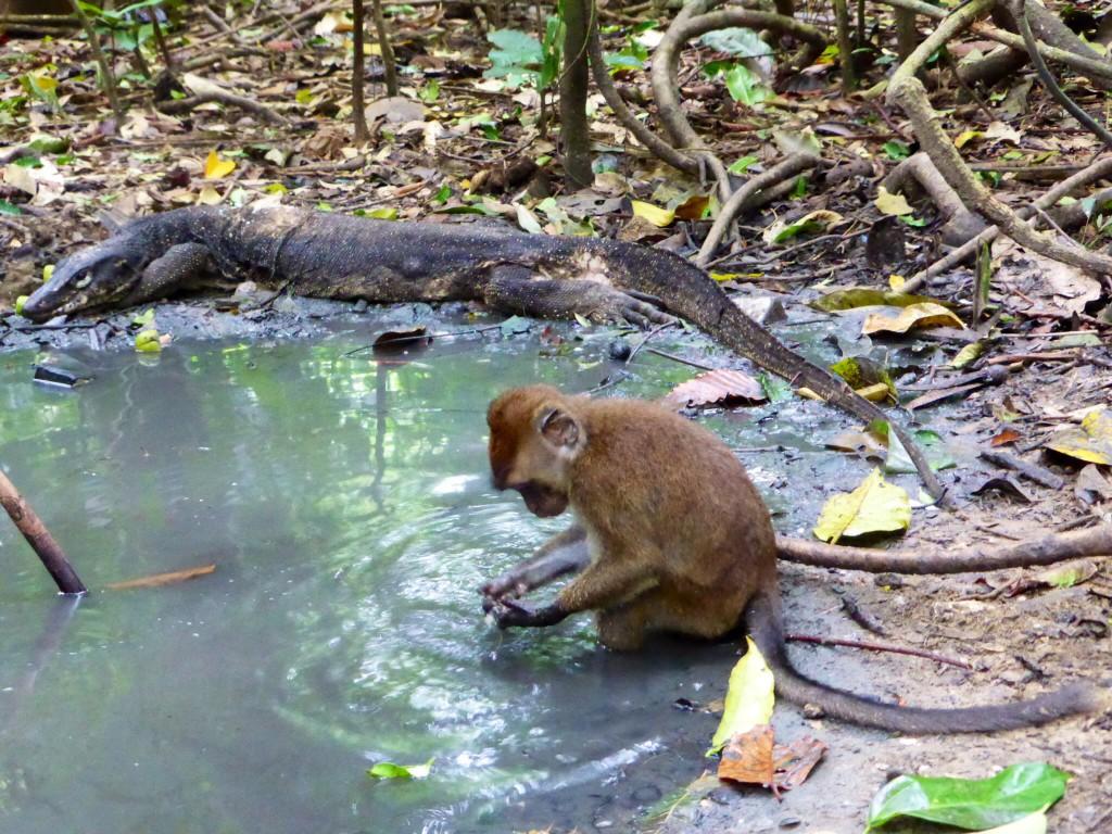 Dschungel-Stelldichein am Wasserloch
