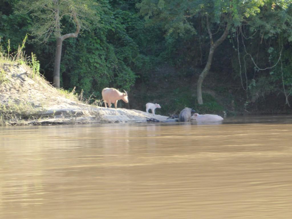 Abkuehlung im Mekong