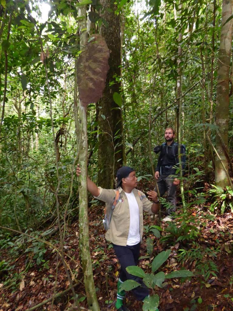 Unser Guide Jonny zeigt einen Termitenbau