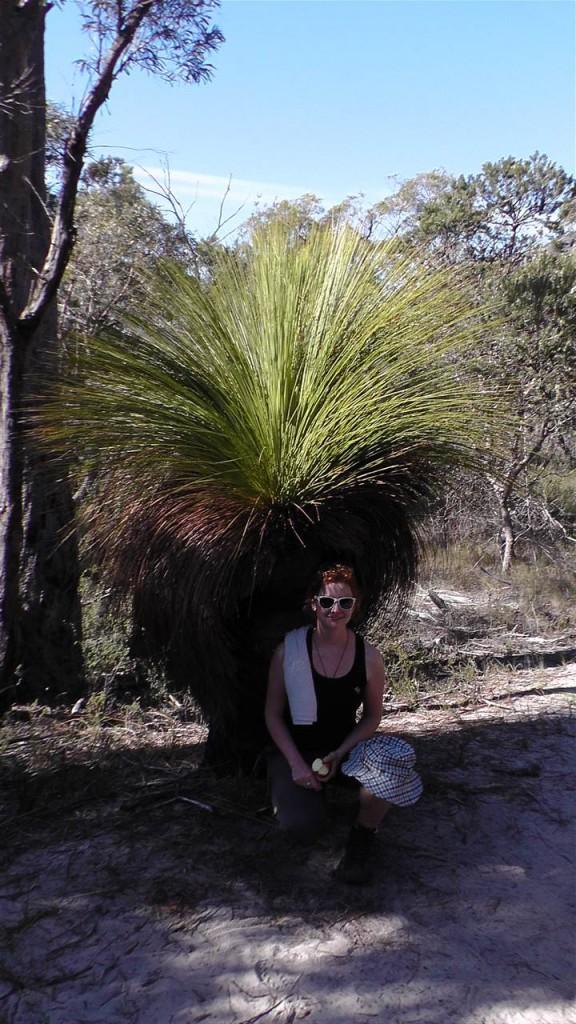 Cooler Grasstree