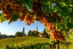 Pomurje - die vielfältige Region im Auge Sloweniens